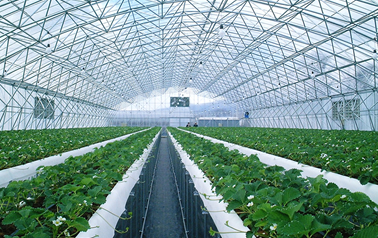 F-CLEAN® green house film